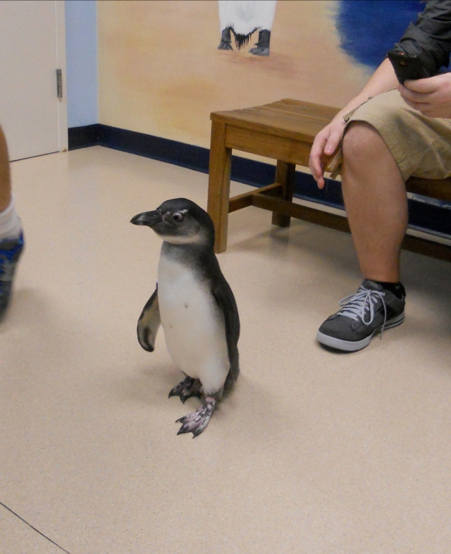 Sticky the penguin!
